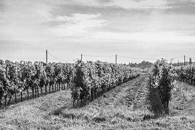 Photograph - Grape Vine Rows In Mono by Georgia Fowler