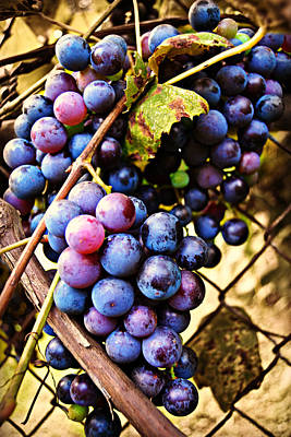 Photograph - Grape Vines by Amber Summerow