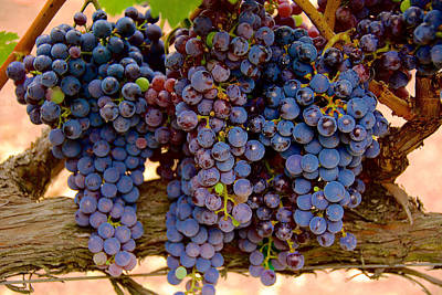 Photograph - Grape Works by Richard J Cassato