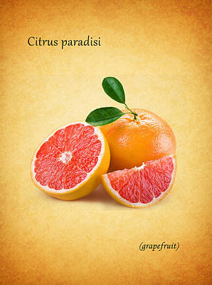 Grapefruit Print by Mark Rogan