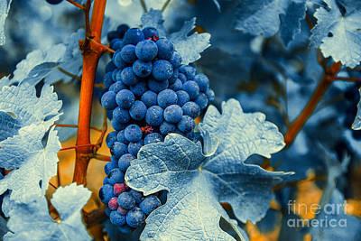 Grapes - Blue  Art Print by Hannes Cmarits
