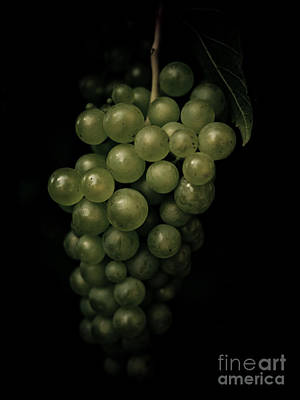 Deciduous Woody Vines Photograph - Grapes by Brothers Beerens