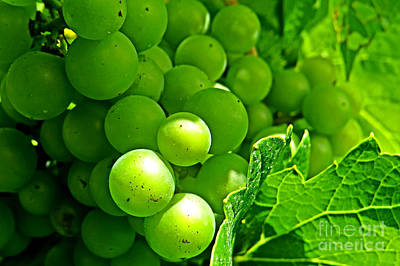 Photograph - Grapes by Dawn Gari