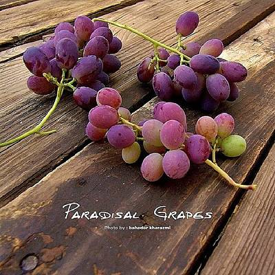Grapes Photograph - #grapes #fruit #pink #purple #green by Bahador Kharazmi