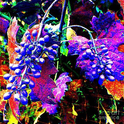 Grapes II Original