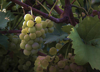 Photograph - Grapes II by Wayne Meyer