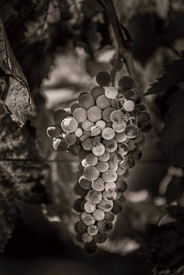 Grapes In Grey 3 Art Print by Clint Brewer