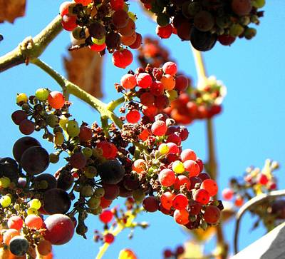 Photograph - Grapes In Summer by Elizabeth Hoskinson