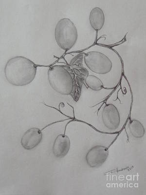 Drawing - Grapes by Isabel Honkonen