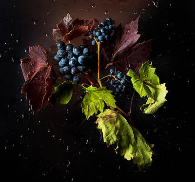 Red Leaves Photograph - Grapes by Ivan Vukelic