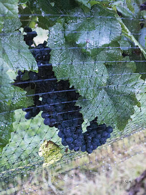 Photograph - Grapes by Lee Hartsell