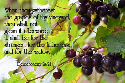 Photograph - Grapes Of The Vineyard by Sheri McLeroy