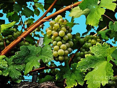 Photograph - Grapes Of Wachau by Elvis Vaughn