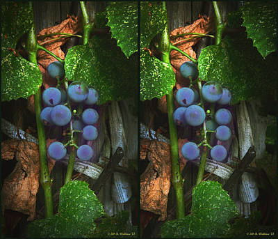 Grapes On The Vine - Gently Cross Your Eyes And Focus On The Middle Image Art Print by Brian Wallace