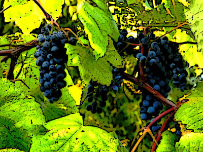 Stomp Digital Art - Grapes On The Vine by Patricia Erwin