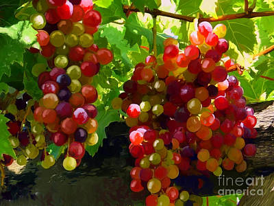 Grapes On The Vine Print by Tim Gilliland