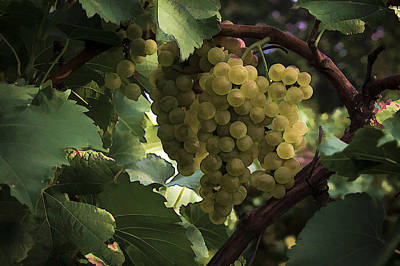 Photograph - Grapes by Wayne Meyer