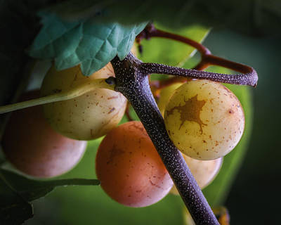 Photograph - Grapes With Color by James Barber