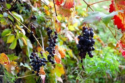 Grapevine Original