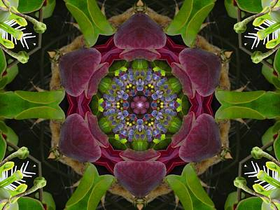 Digital Art - Grapevine Portal Mandala by Diane Lynn Hix
