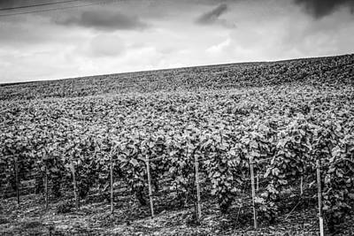Grapevines Of Reims Original by Chris Smith