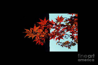 Red Leaves Photograph - Graphic Leaves by Delphimages Photo Creations