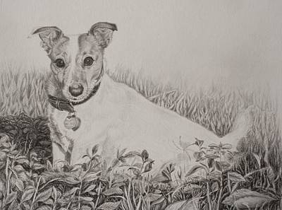 Drawing - Graphite Drawing - Jack Russell Terrier by Roena King