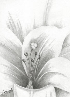 Lillies Drawing - Graphite Lilly Sketch by Cindy Angiel