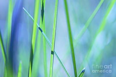 Grass Abstract - 0102a Art Print