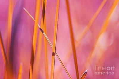 Photograph - Grass Abstract - 03439 by Variance Collections