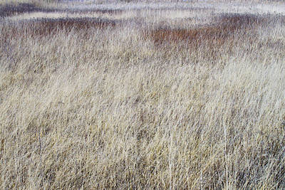 Autumn Photograph - Grass Abstract by Ivan Slosar