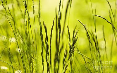 Grass Abstract Art Print by Svetlana Sewell