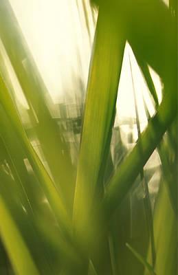 Angels And Cherubs - Grass abstract by Ulrich Kunst And Bettina Scheidulin