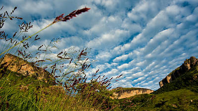 Photograph - Grass And Clouds by Alistair Lyne
