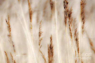 Abstract Seascape Digital Art - Grass And Reeds - Outer Banks North Carolina by Dan Carmichael