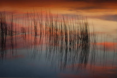 Photograph - Grass And Sunset Reflection Img 6316 by Greg Kluempers
