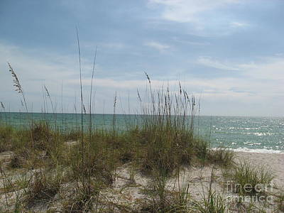 Soap Suds - Grass At The Beach by Frederick Holiday