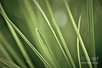 Natural Background Photograph - Grass Blades Abstract  by Elena Elisseeva
