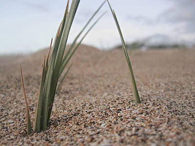 Photograph - Grass Blades by Marilyn Wilson