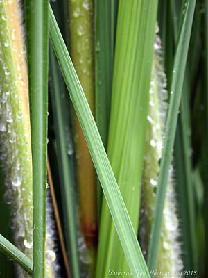 Art Print featuring the photograph Grass Blades Morning Dew by Deborah Fay