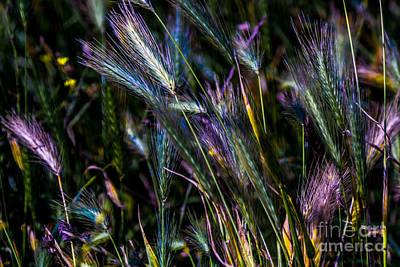 Grass Blades Original