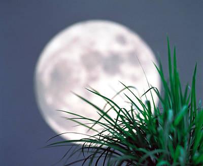 Grass Blades With Full Moon Art Print