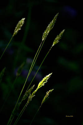 Photograph - Grass by Christina Rollo