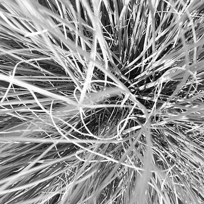 White Photograph - Grass by Christy Beckwith