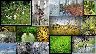 Photograph - Grass Collage Variety by Tikvah's Hope