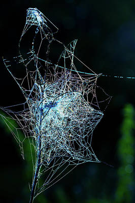 Covering Up Photograph - Grass Covered With Spider's Web by Wladimir Bulgar