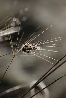 Photograph - Grass Diamonds One by Brad Grove