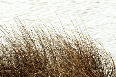 Photograph - Grass Down By The Shore Of Virginia Beach by Artist and Photographer Laura Wrede