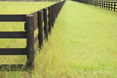 Photograph - Grass Fence by Michael Davis