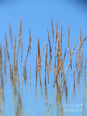 Photograph - Grass by France Laliberte